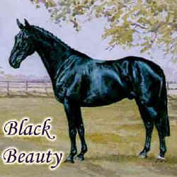Illustration for Black Beauty